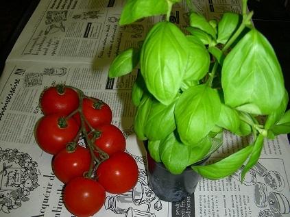 トマトとバジルは共生植物