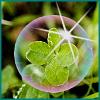 clover[1]