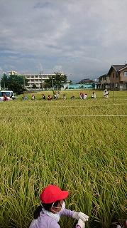 うるち米の収穫!!(5年生)