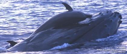クジラに乗ったイルカの写真