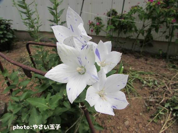 IMG_9600.jpg