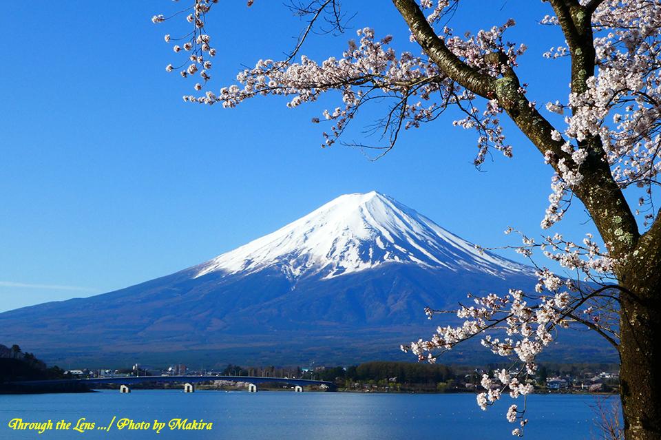 桜と河口湖大橋TZ2