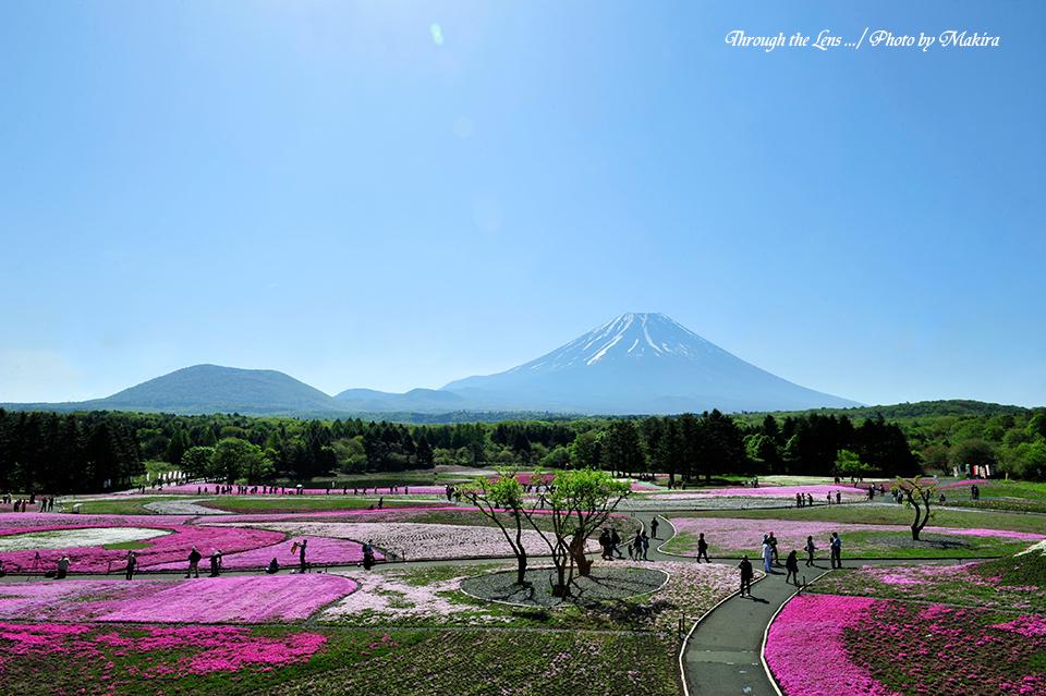 芝桜と富士1