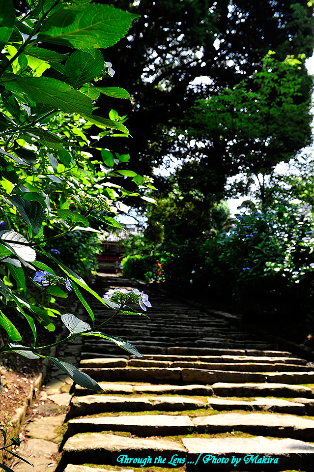 薬井門から仁王門への磴道2
