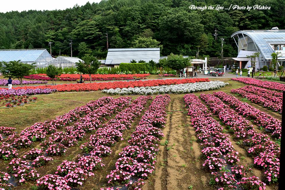 花の都公園56D1
