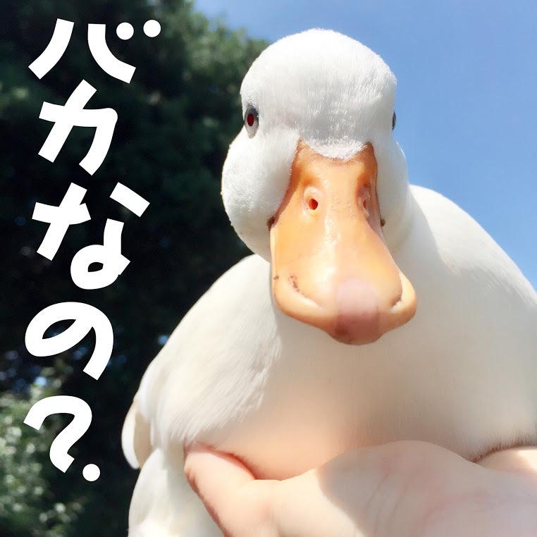 exif_temp_image-14.jpg