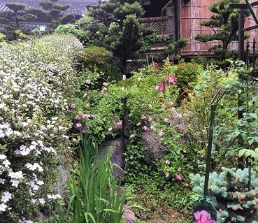 IMG_4082[1]2017花盛
