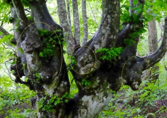 s-怨霊の木 (1)