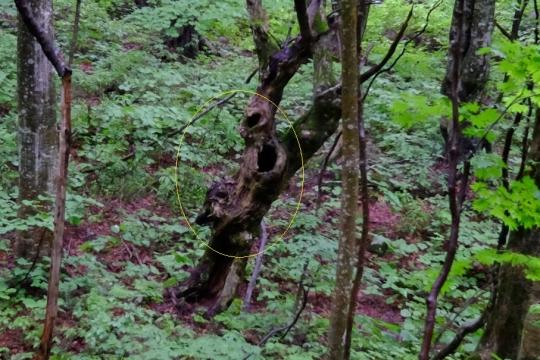 s-怨霊の木 (4)