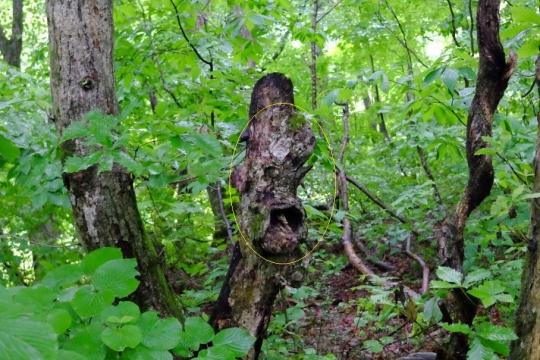 s-怨霊の木 (3)