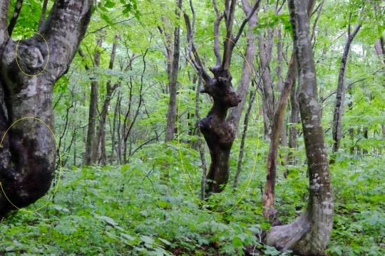 s-怨霊の木 (7)