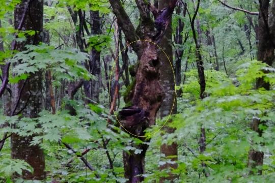 s-怨霊の木 (11)