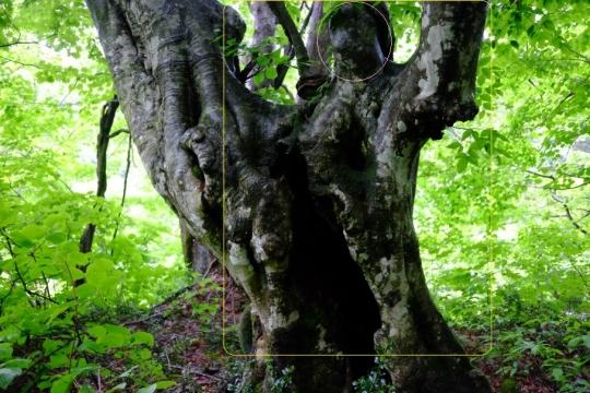 s-怨霊の木 (15)
