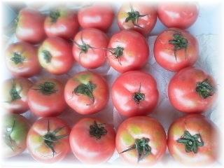 トマト20170630