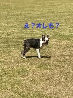 IMG_0010 アルくんペイント