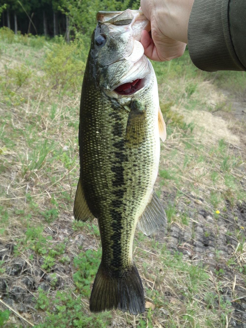 bass44cm1.jpg