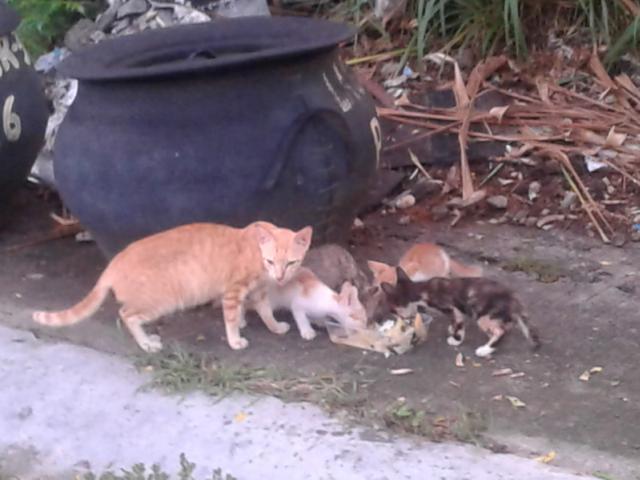 ネコの食事
