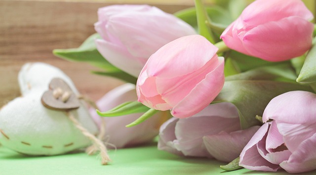 tulips-2167654_640.jpg