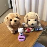 ニャンコとポコちゃん