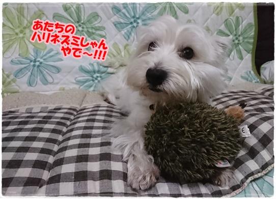 azuki_20170706224143b1f.jpg
