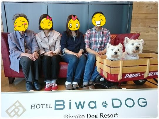 biwadog4.jpg