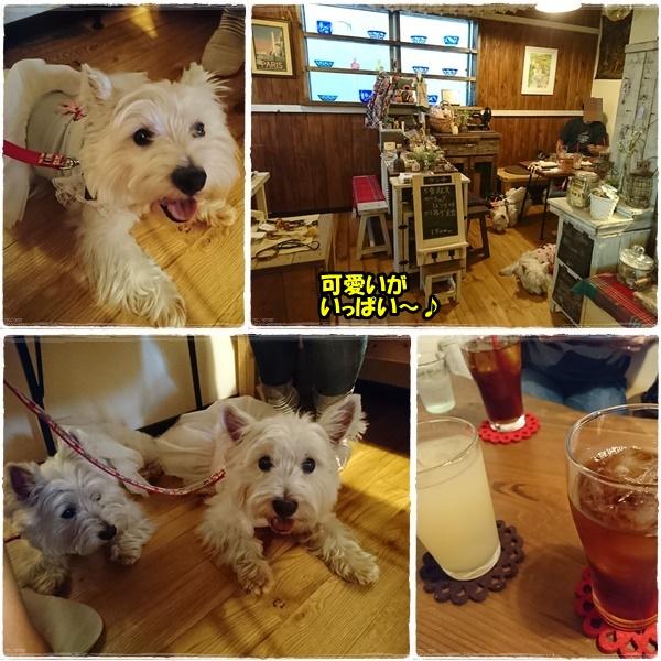 cafe2_20170704202547ef8.jpg