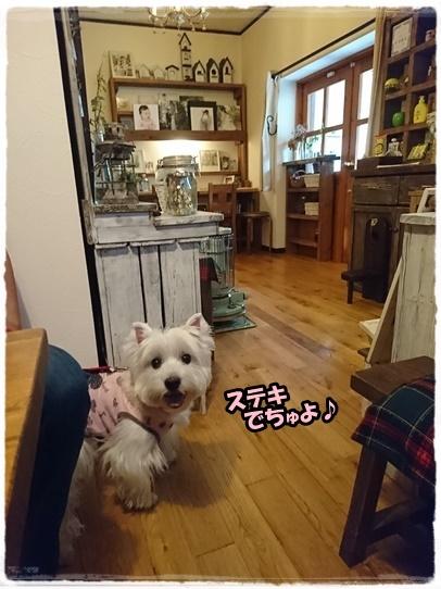 cafe3_20170704202546ac5.jpg