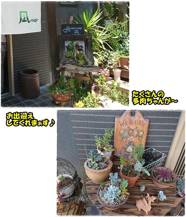 cafenagi3.jpg
