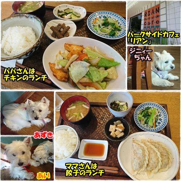 lunch1_201706290016250d5.jpg