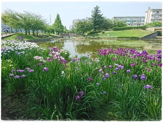 park1_20170701183532b10.jpg