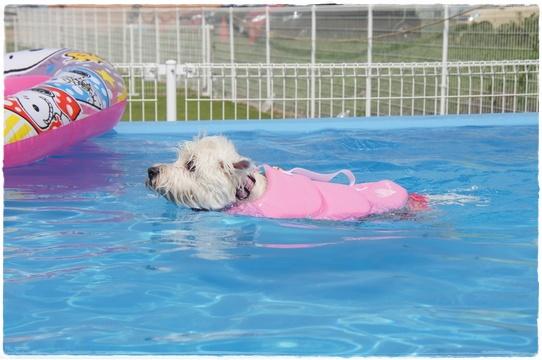 pool10_20170906115132f42.jpg