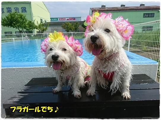 pool2_20170906113701dae.jpg