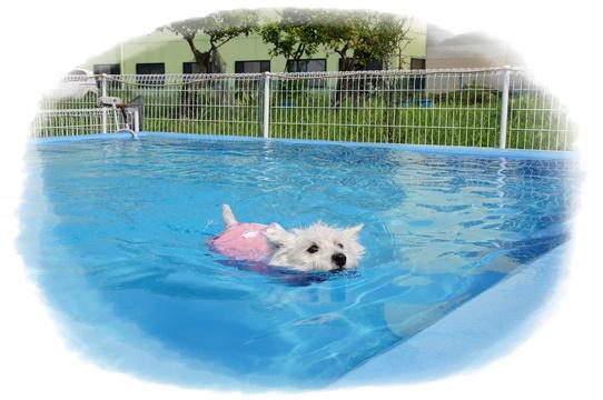 pool9_20170906115134862.jpg