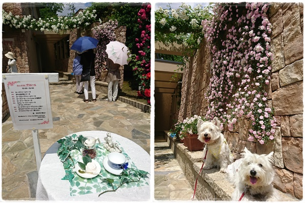 rosegarden1.jpg