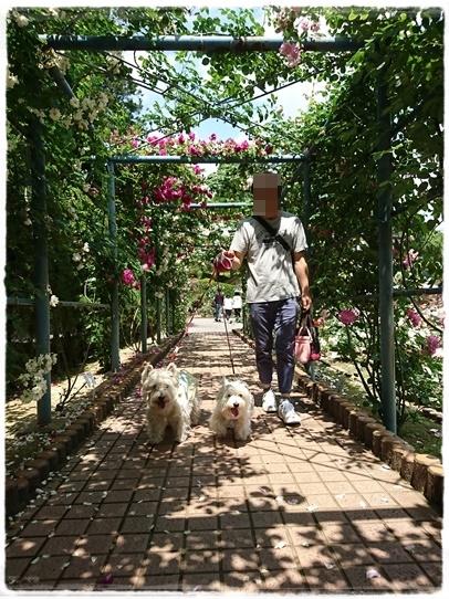 rosegarden14.jpg