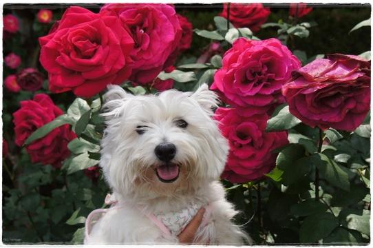rosegarden16.jpg