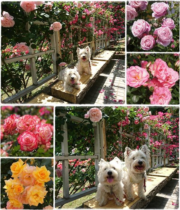 rosegarden18.jpg
