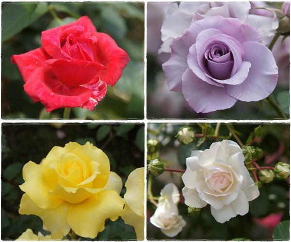 rosegarden21.jpg