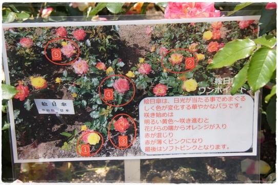 rosegarden22.jpg