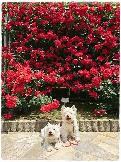 rosegarden7.jpg