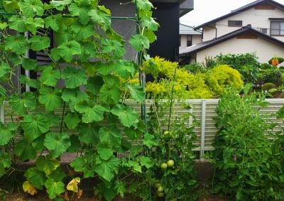 nora_0008.jpg