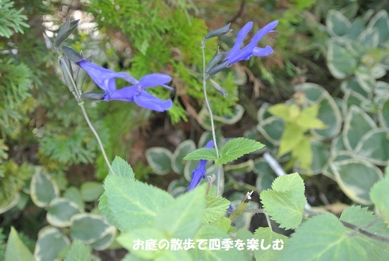 amejisutose-ji9_20170907222413cac.jpg