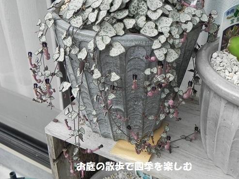 ha-tokazura3_20170710095326a5c.jpg