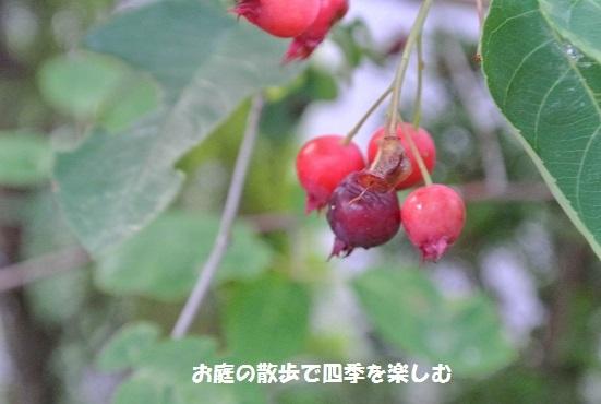 jyu-nberi-48.jpg