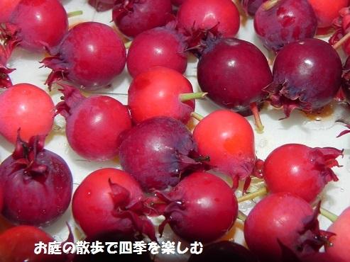 jyu-nberi-50.jpg