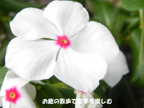 nitinitisou3_2017071114313183a.jpg