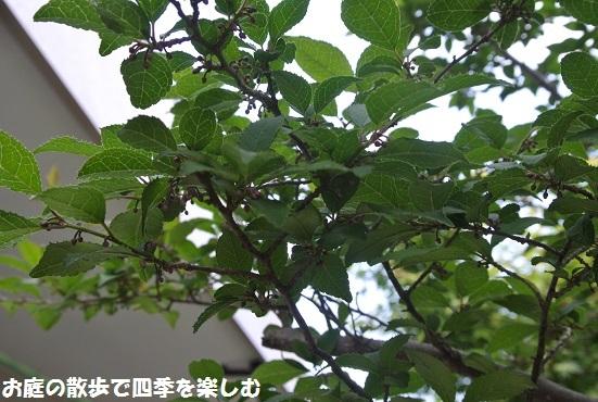 niwa258.jpg