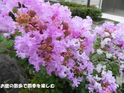 sarusuberi3_20170814164422167.jpg