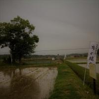 3mineyama6inasaku.jpg