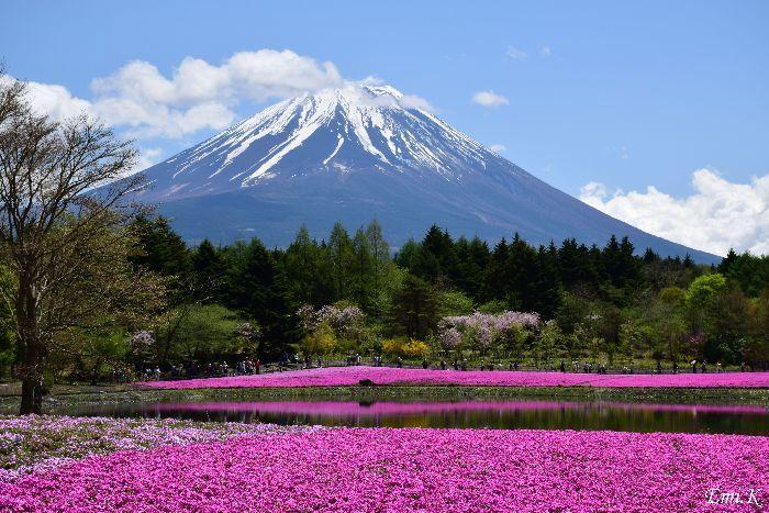 006-Emi-富士芝桜まつり